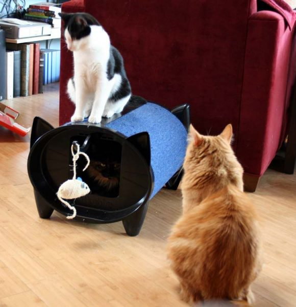 Catstacular Event – Giveaway: ScratchKabin katcabin