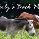 From Kitchen to Table:  Guest Post from Beverly's Back Porch