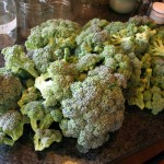 From the Garden 2012 – Broccoli!