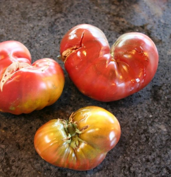 From the Garden 2012 – Tomatoes