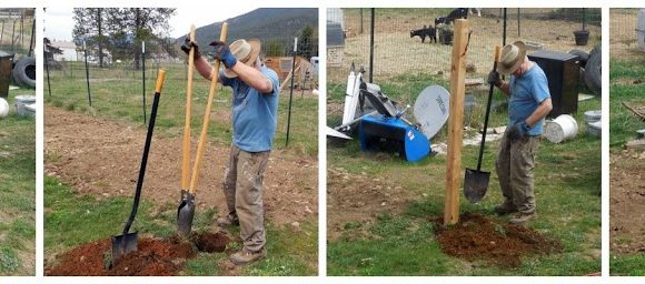 Putting Up Fence and Building a Gate – No Deer or Goats will #DigIn to MY Berry Garden!