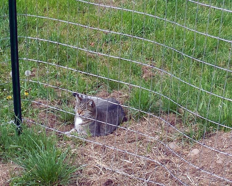 stinky the farm cat