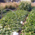 Save Time, Water and Money with Drip Irrigation from DripWorks