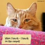 #Sponsored  Can STAINMASTER® Carpet Help The Farm Cats and Their Bad Habits? #MC #UnShameYourPet