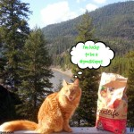GOODLIFE™ Cat Food Is the Dry Cat Food for the Farm Cats #goodlifepet #shop