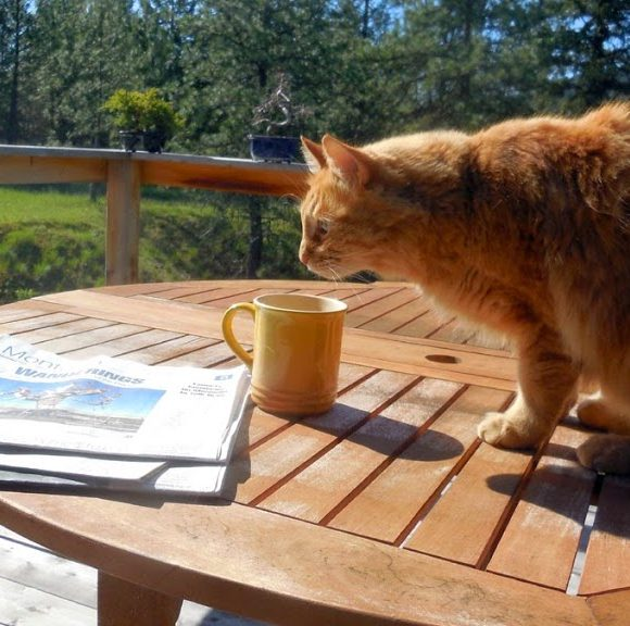 Photo Challenge, Week 21:  In the Morning,  I Sit on the Deck and Read the Paper – at Least in the Warm Weather…