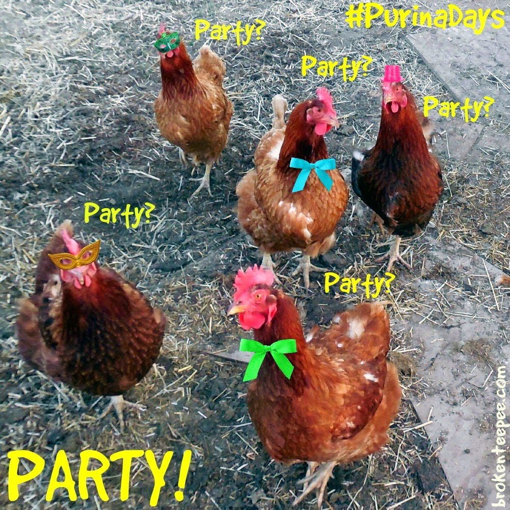Party Chickens, #PurinaDays, Tractor Supply, #spon