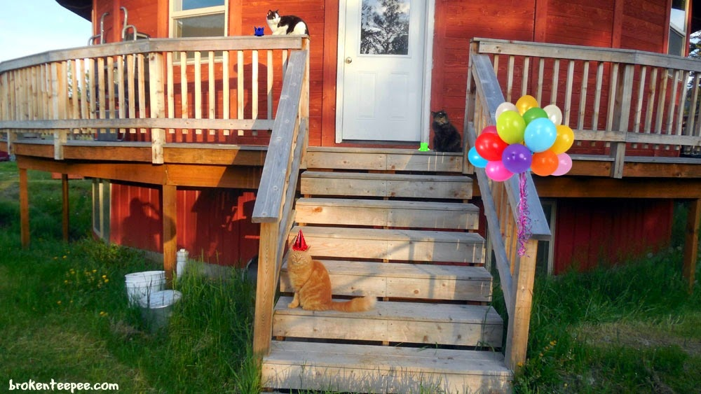 cats on deck, Tractor Supply, #PurinaDays, #spon