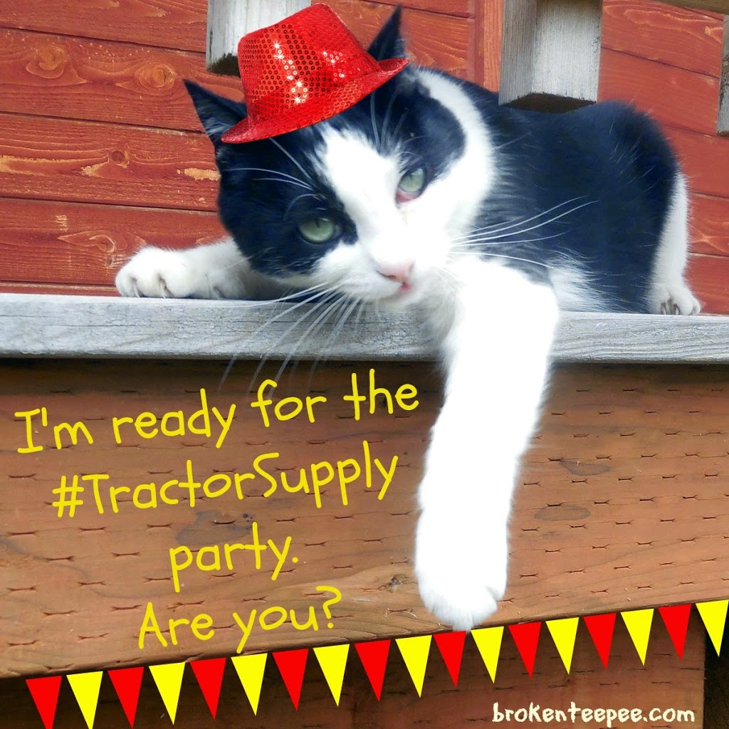Harry the Farm cat ready to party, #TractorSupply, #sponsored