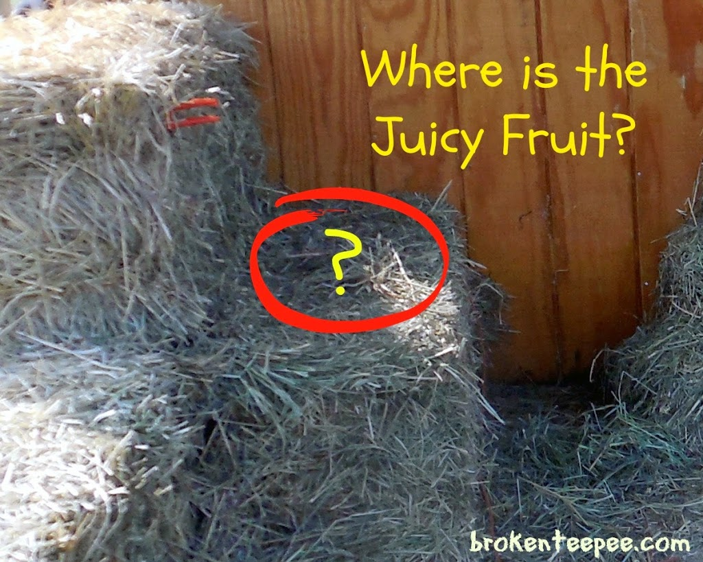 Where is the Juicy Fruit, hay pile, #JuicyFruitFunSide, #shop, #cbias