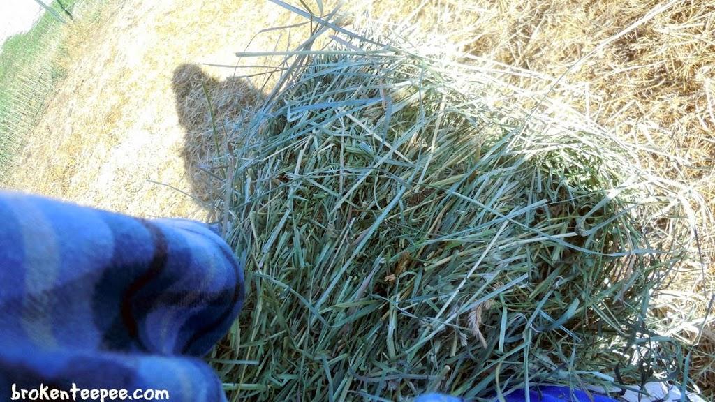 hauling hay, #BalanceRewards, #shop, #cbias