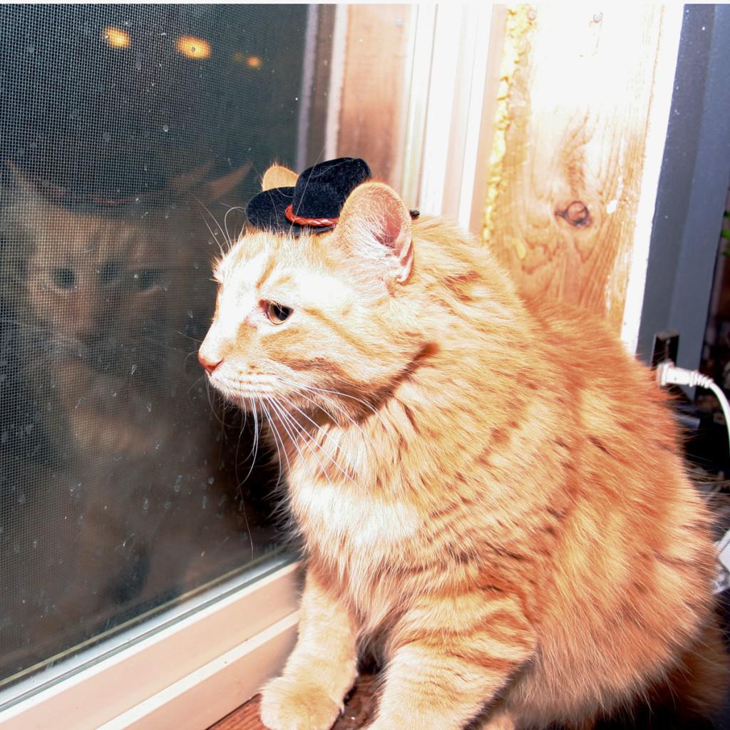 Sherpa-the-Farm-Cat