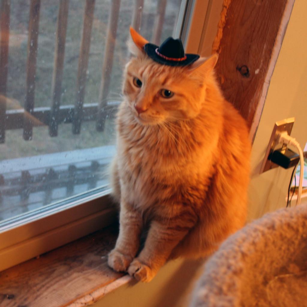 Sherpa-the-cowboy-cat