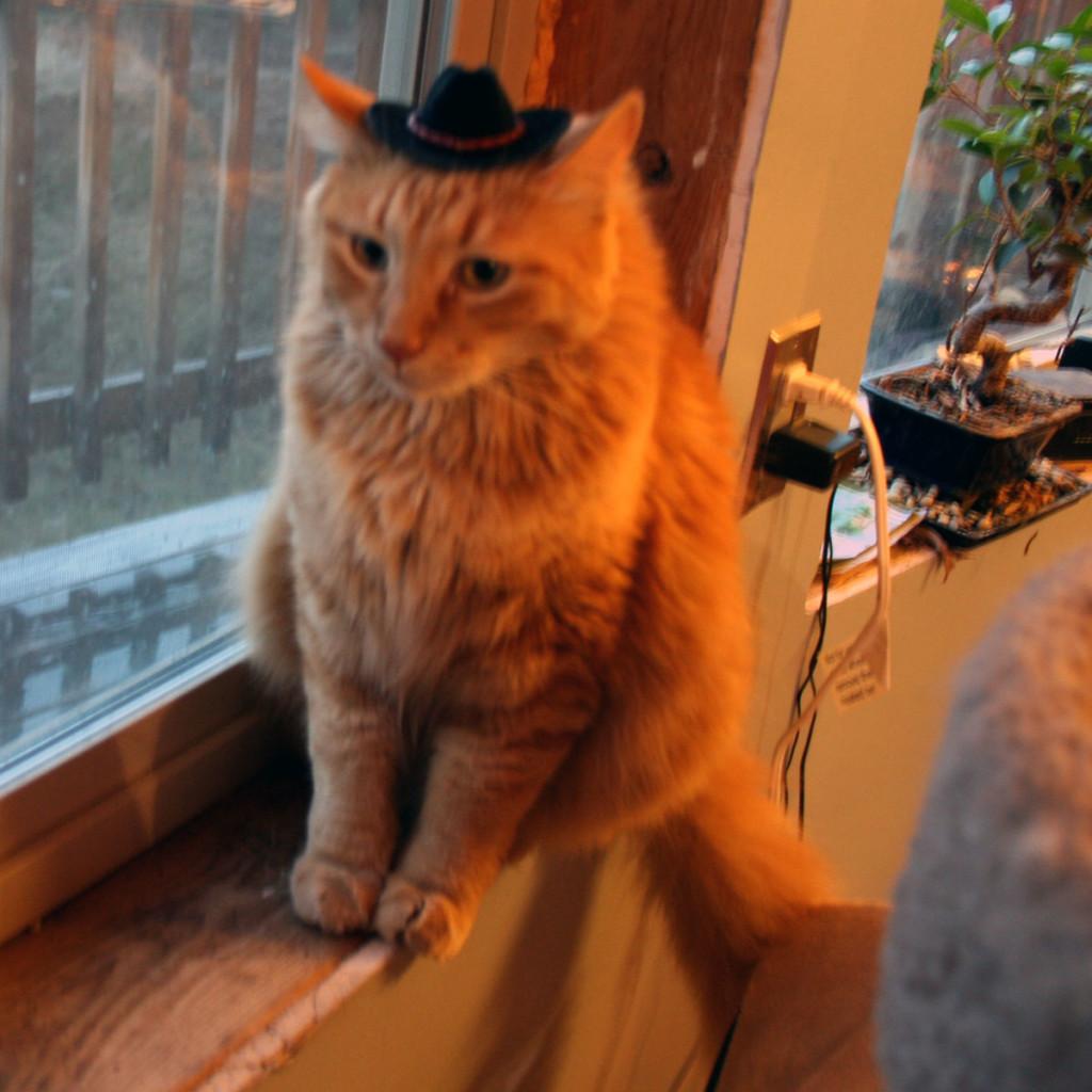 Sherpa-the-Farm-cat-as-cowboy