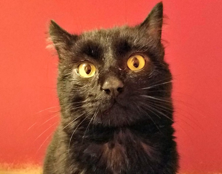 fernando the Farm cat, meet Fernando the Farm cat, a new Farm cat