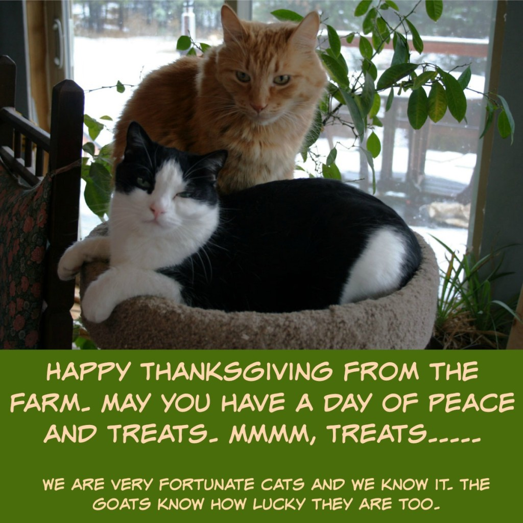 Happy-Thanksgiving-from-the-farm