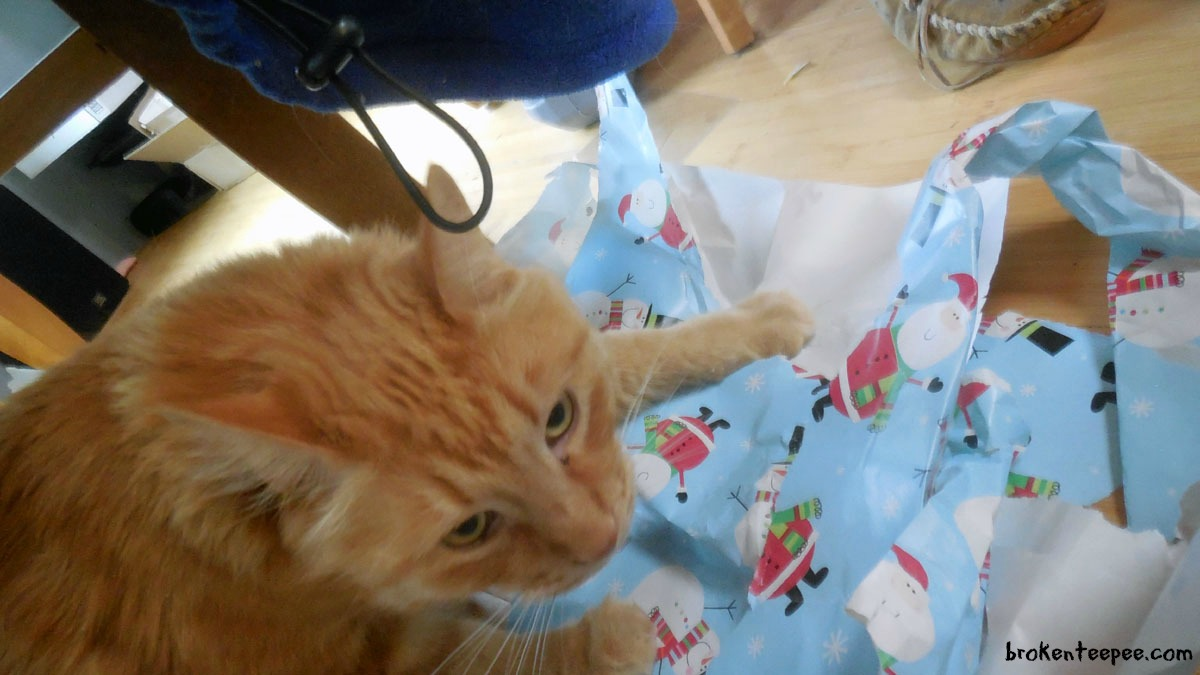 sherpa and wrapping paper - How To Wrap A Cat For Christmas