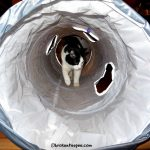 The Farm Cats Love Their New Pets Can Play Cat Tunnel #ad
