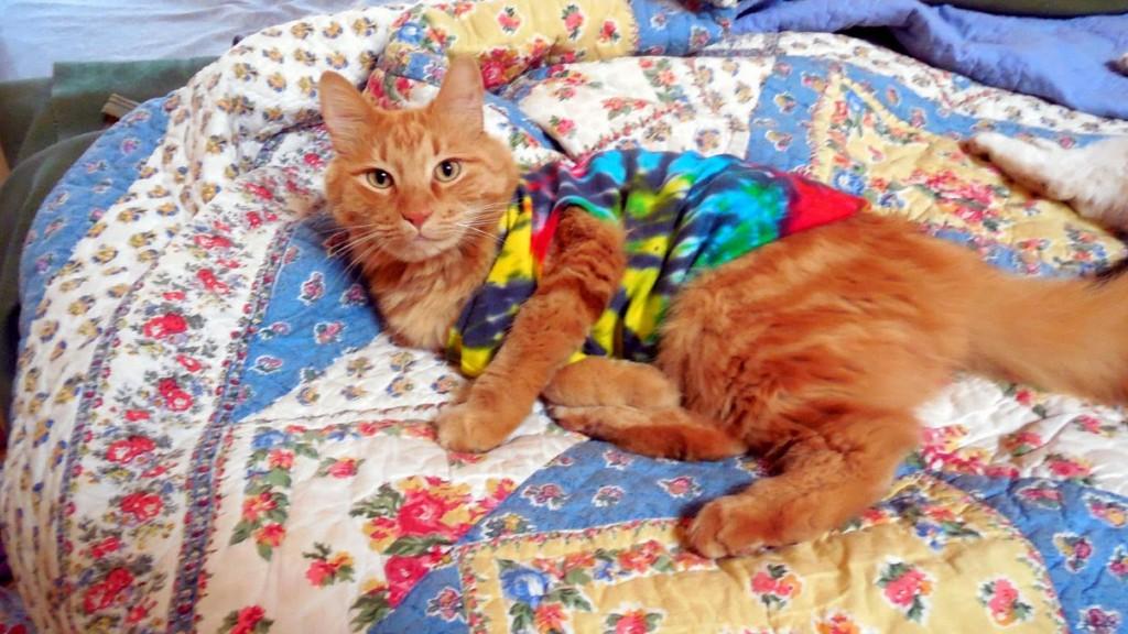 Sherpa the Farm cat in tie dye t shirt