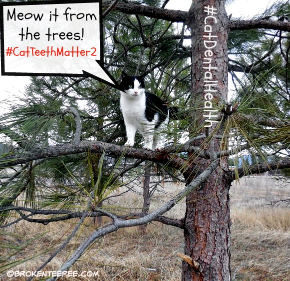 meow-from-trees