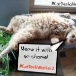 The Farm Cats are United – Cat Teeth Matter