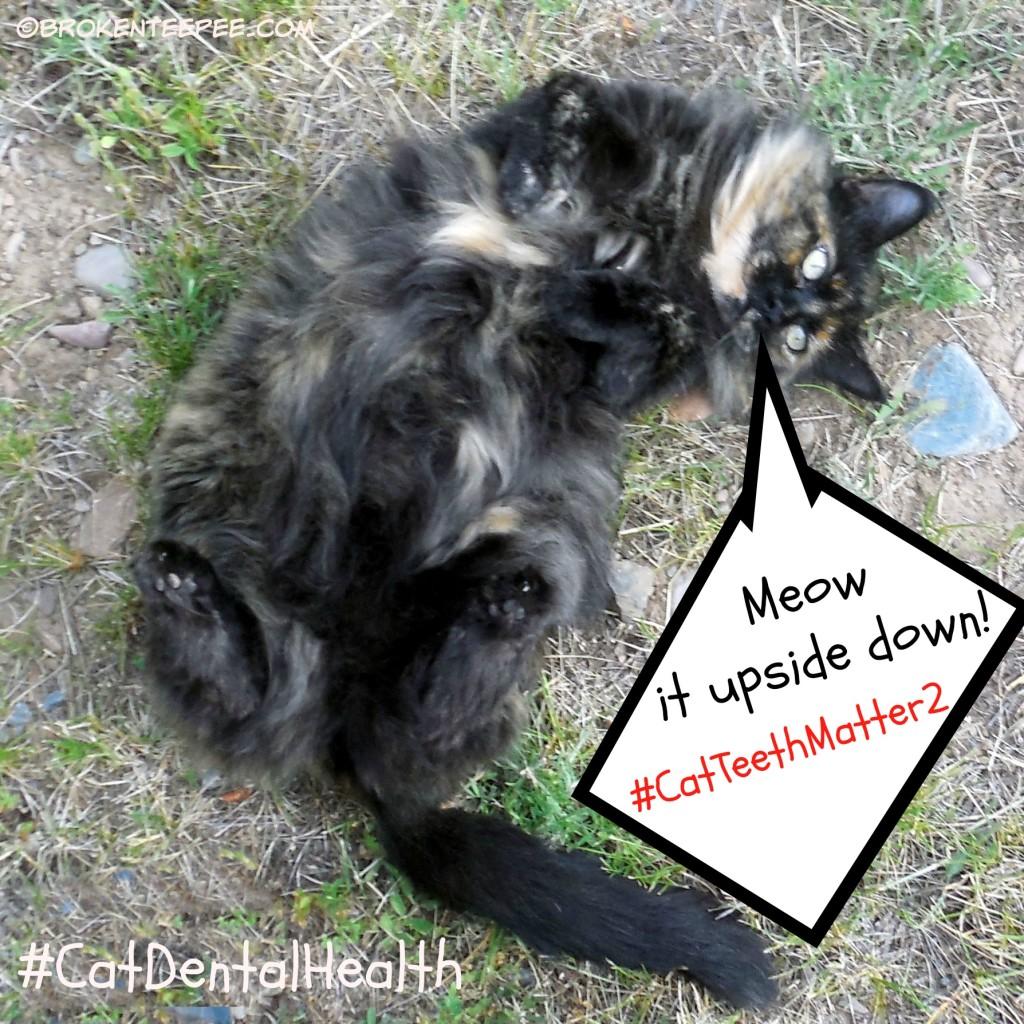 meow upside down