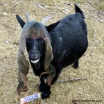 I Goat a Little Wild #WhenImHungry So I Eat a SNICKERS Bar