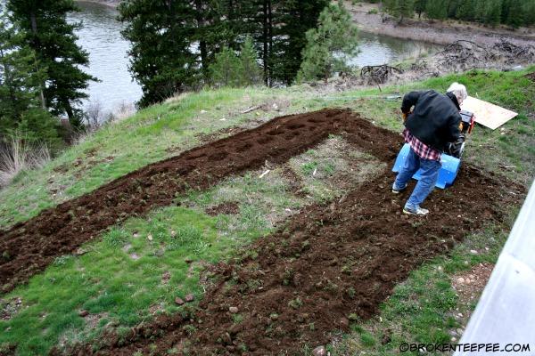 tilling potato garden