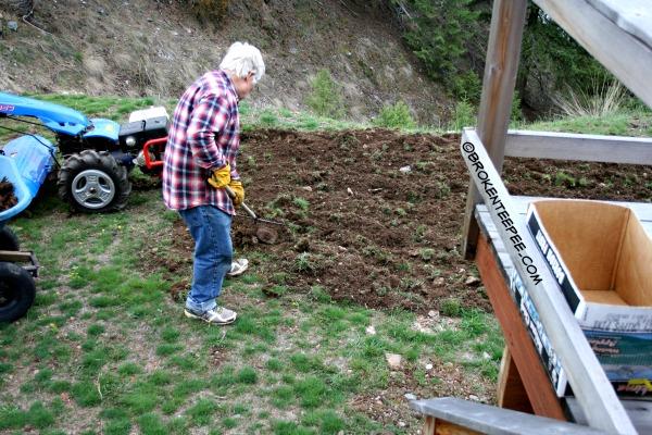 clearing potato garden of rocks
