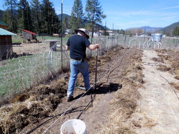 hubby using broadfork in garden