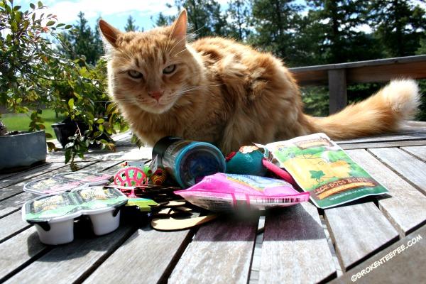 Sherpa the Farm cat, cat swag