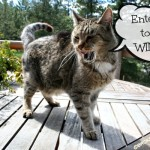 A BlogPaws Giveaway from the Farm Cats