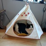 The Farm Cats Have a TeePee and it Isn't Broken!