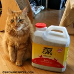 Where the Farm Cats Go – Tidy Cats Cat Litter