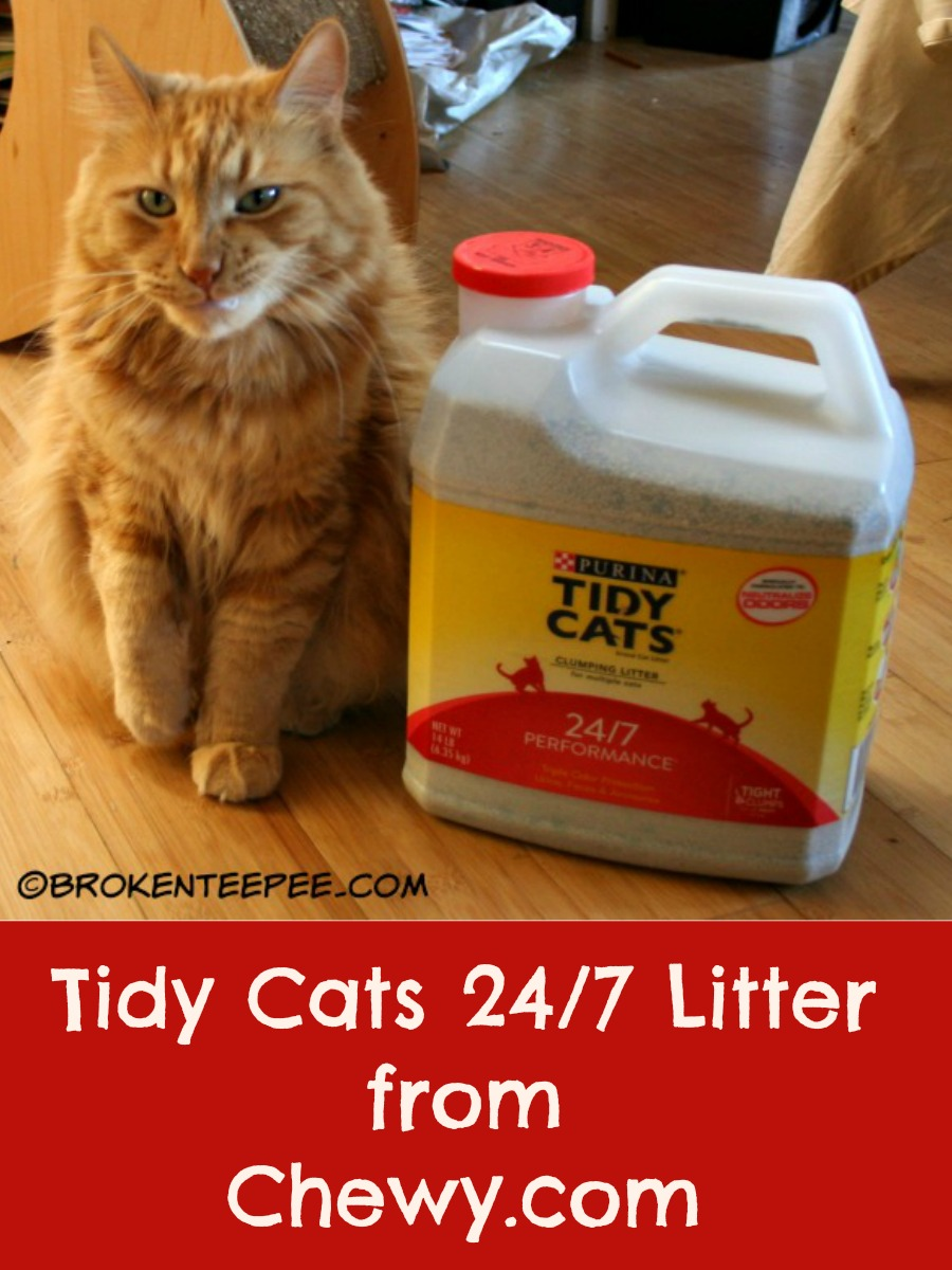 Cat going in and out of litter box