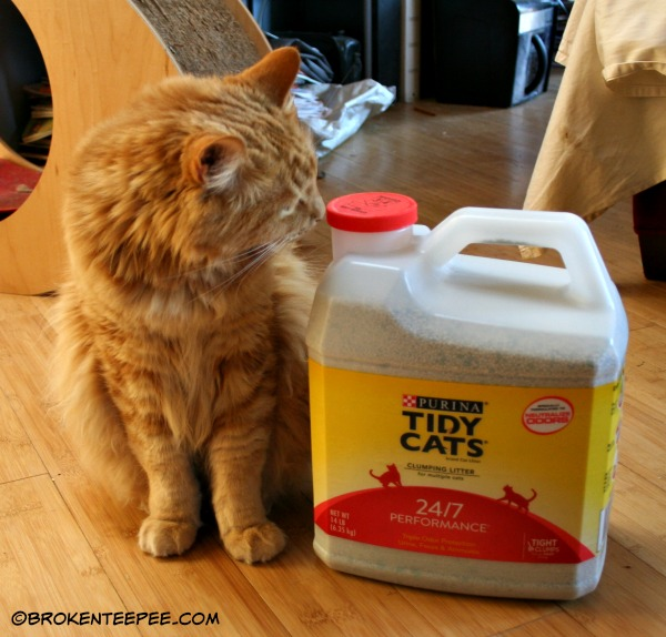 Tidy Cats 24/7 Cat Litter, Chewy.com, #sponsored