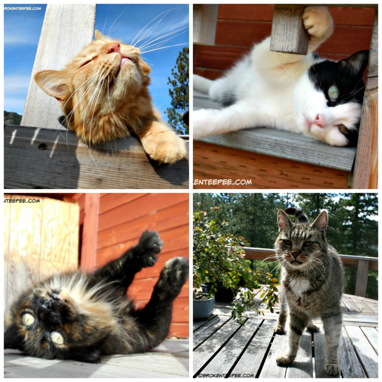 International Cat Day, The Farm cats