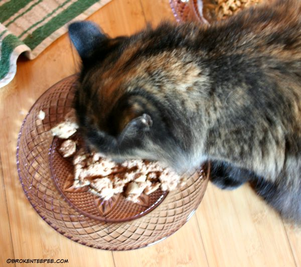 Pumpkin, Natural Balance Delectable Delights, PetSmart, Natural Balance at PetSmart, #PetSmartStory, #sponsored