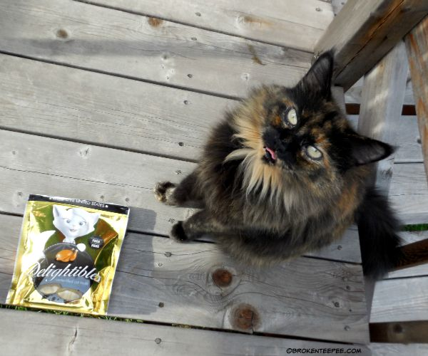 True science, Pumpkin the Farm cat, Delightibles, #sponsored