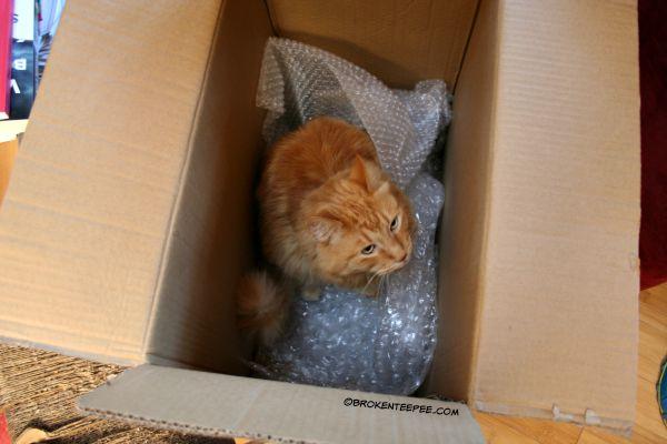 Sherpa the Farm cat, cat in a box