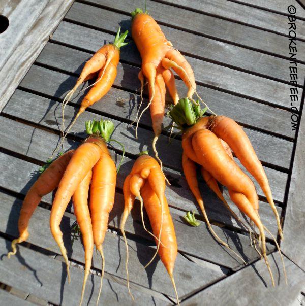 carrots, WTH carrots