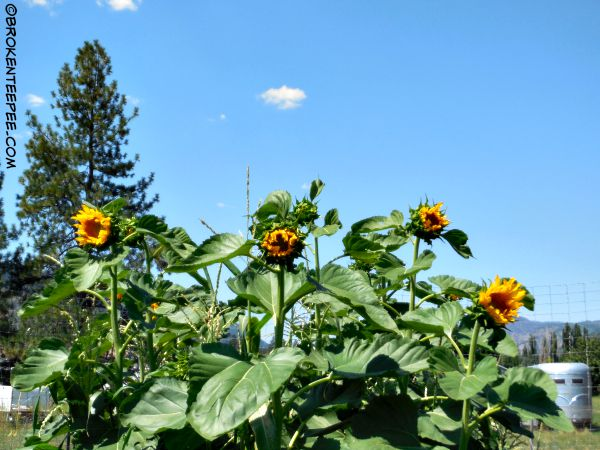 The State of the Garden August 1, 2015