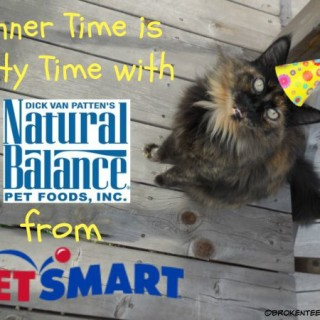 Natural Balance, PetSmart, Pumpkin the Farm cat, #sponsored