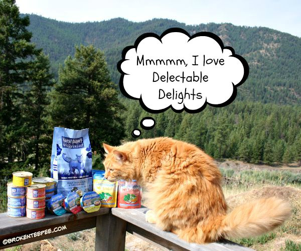 Natural Balance Cat Foods, PetSmart, Sherpa the Farm cat, #sponsored
