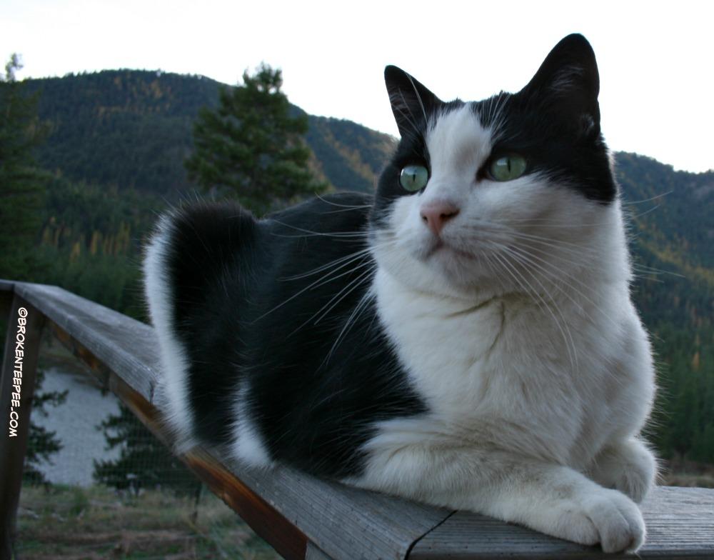 Harry the Farm cat - 3
