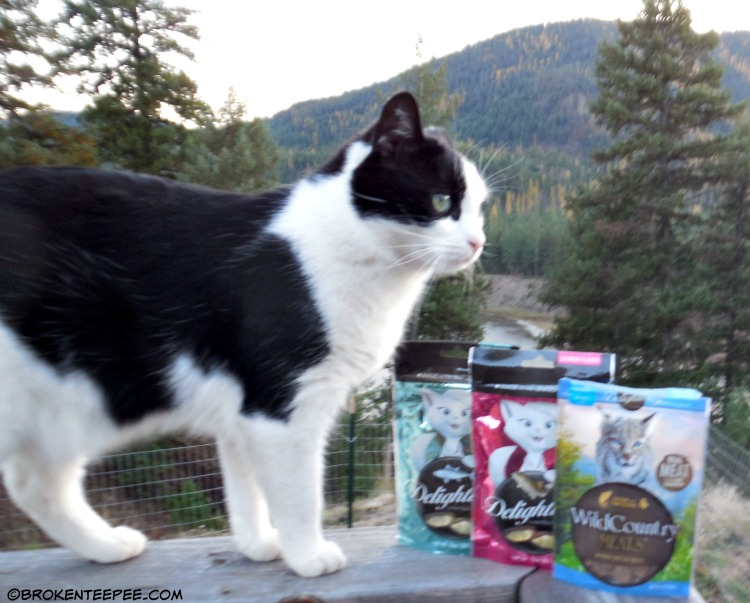 Harry the Farm cat, Delightibles, Wild Country Meats, gourmet cat treats#sponsored