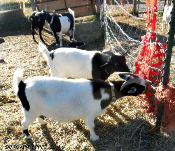 slow feed hay feeder