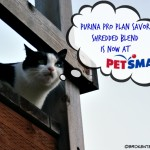 Harry the Farm cat longs for PetSmart