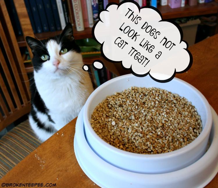 Catit, Catit Oasis, Catit Grass Planter, Harry the Farm cat, The Farm cats, #sponsored