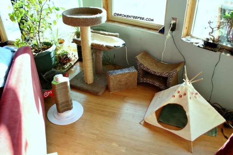 Catit, Catit Oasis, Cat Corner in the yurt, The Farm cats, #sponsored